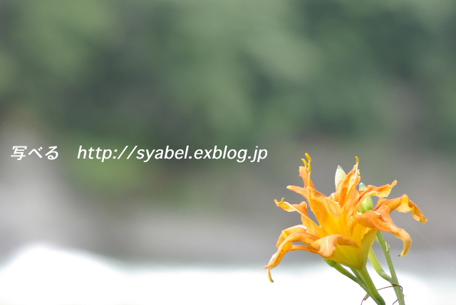 c0153764_19202446.jpg