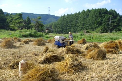 小麦の脱穀_c0110869_22581030.jpg