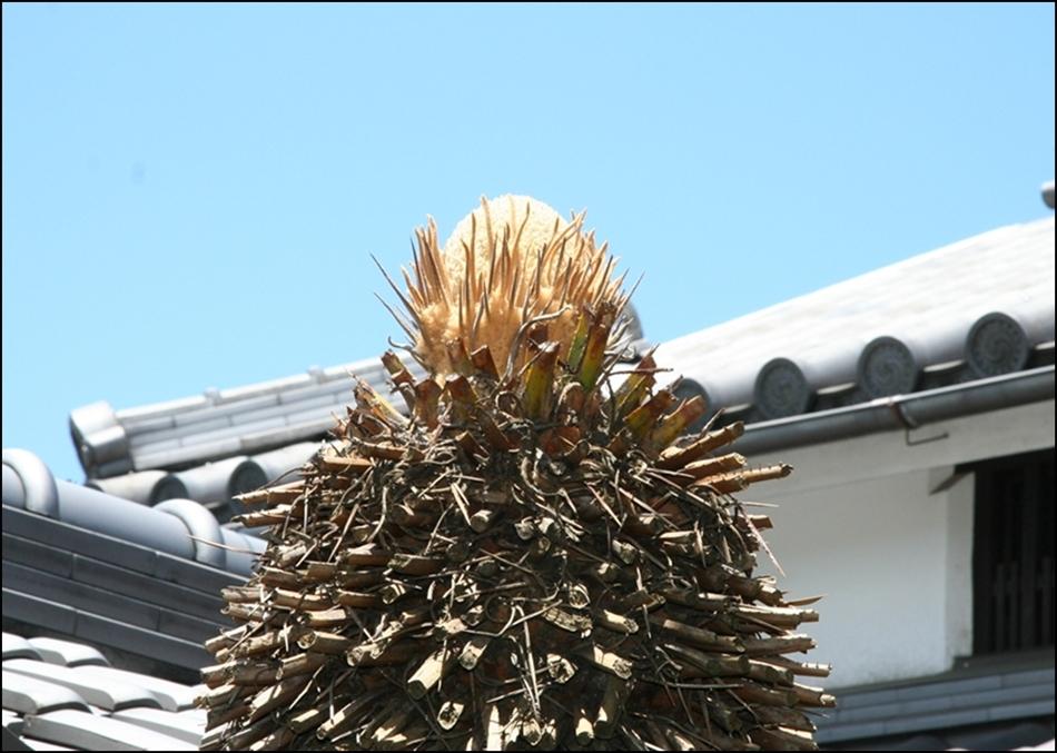 例年のように今年も6月上旬に昨年の葉を刈り込みました。例年だとすぐ新しい... ソテツに花  き