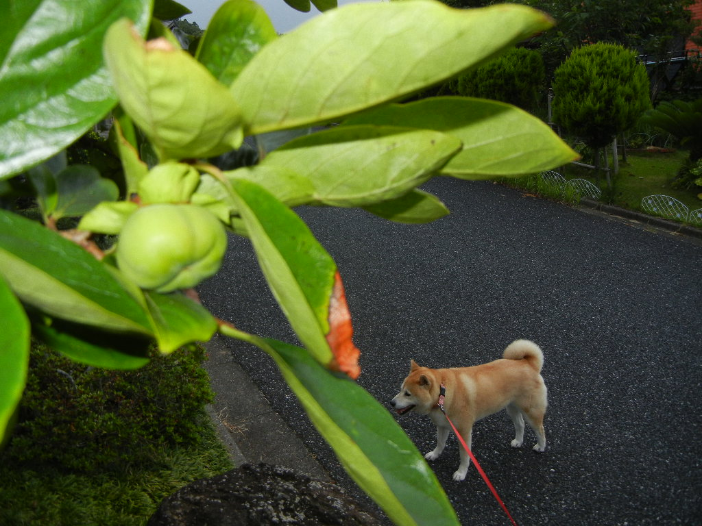 2011年7月19日(火)台風6号接近!_f0060461_1346814.jpg