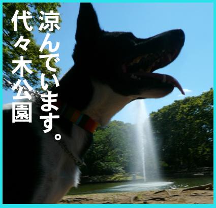 まったり涼んで・・ます。代々木公園_e0236072_15234829.jpg