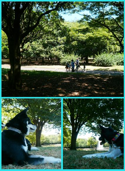 まったり涼んで・・ます。代々木公園_e0236072_1537596.jpg