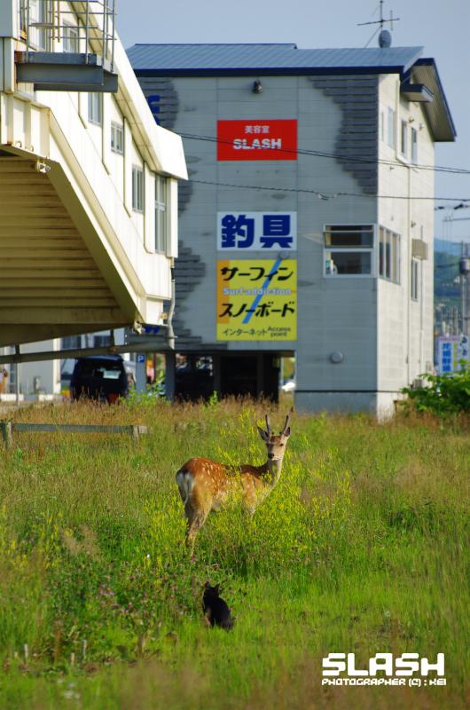 b0127175_2011363.jpg