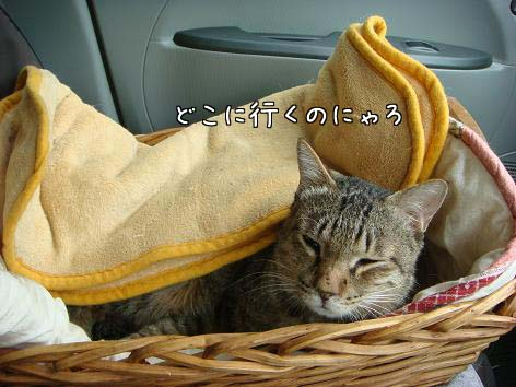 動物病院へ_f0064906_16512098.jpg