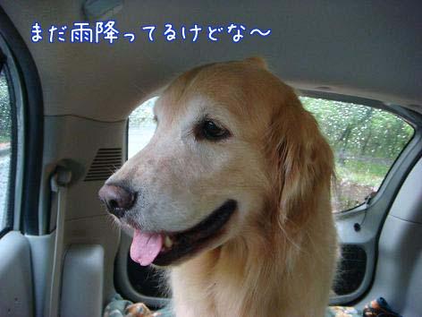 動物病院へ_f0064906_1655119.jpg