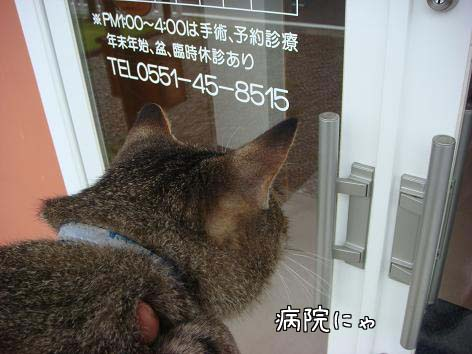 動物病院へ_f0064906_1658403.jpg