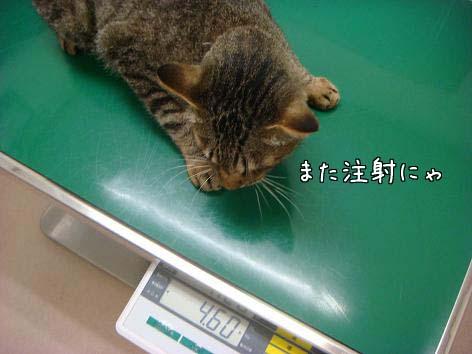 動物病院へ_f0064906_16594675.jpg