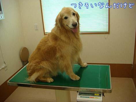 動物病院へ_f0064906_17112510.jpg