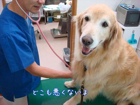 動物病院へ_f0064906_1712051.jpg