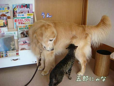 動物病院へ_f0064906_17152161.jpg