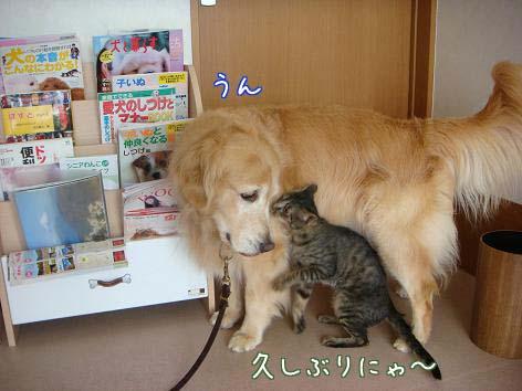 動物病院へ_f0064906_1716058.jpg