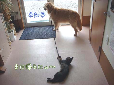 動物病院へ_f0064906_17173378.jpg