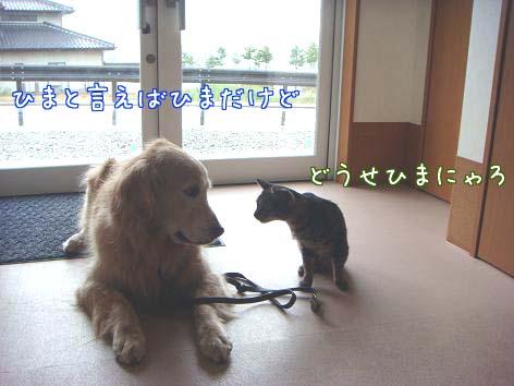 動物病院へ_f0064906_17183864.jpg