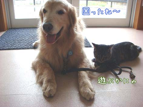 動物病院へ_f0064906_171852100.jpg