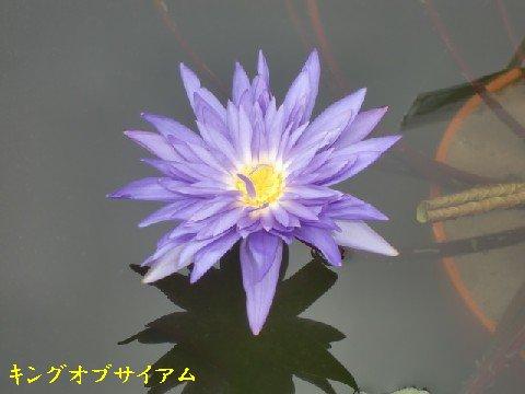 b0012636_8311512.jpg