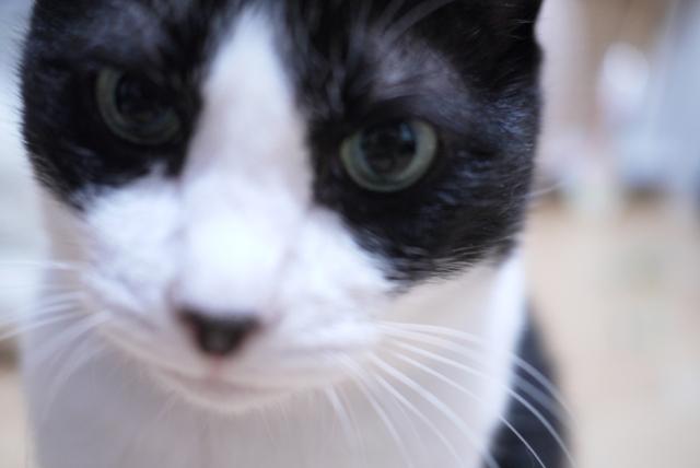 お誕生日猫 空14歳編。_a0143140_2212778.jpg
