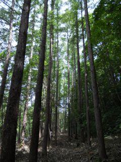 森と風のがっこう 3.11後 その1_a0162646_14153798.jpg