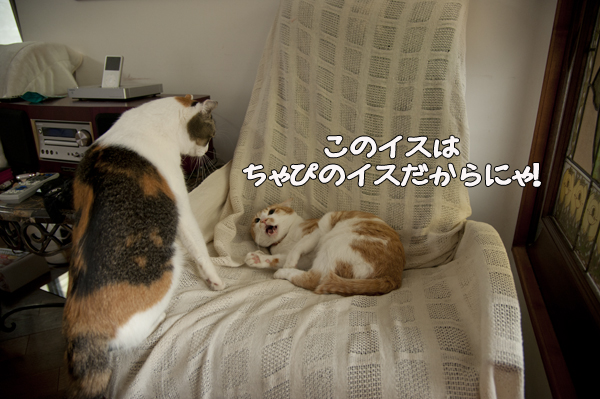 b0141397_10512950.jpg