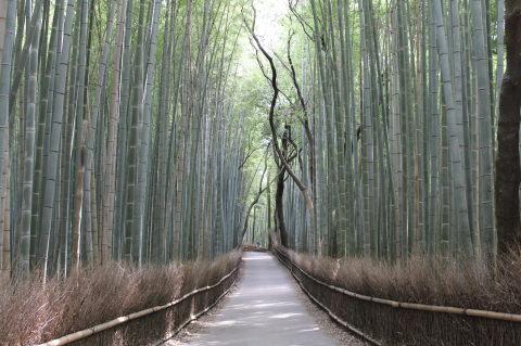 京都 trip_e0221708_19333396.jpg