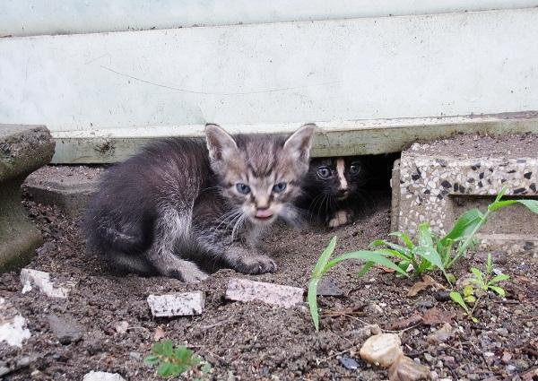 捨猫&・・・ _f0214527_12161019.jpg