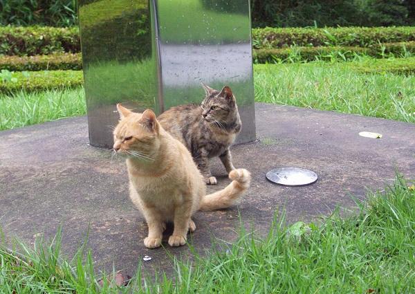 捨猫&・・・ _f0214527_12201776.jpg