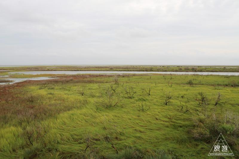 107 Galveston Island State Park ~湿地に潜入できず~_c0211532_12584331.jpg