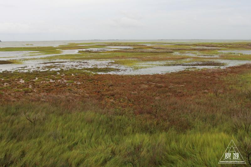 107 Galveston Island State Park ~湿地に潜入できず~_c0211532_12595173.jpg