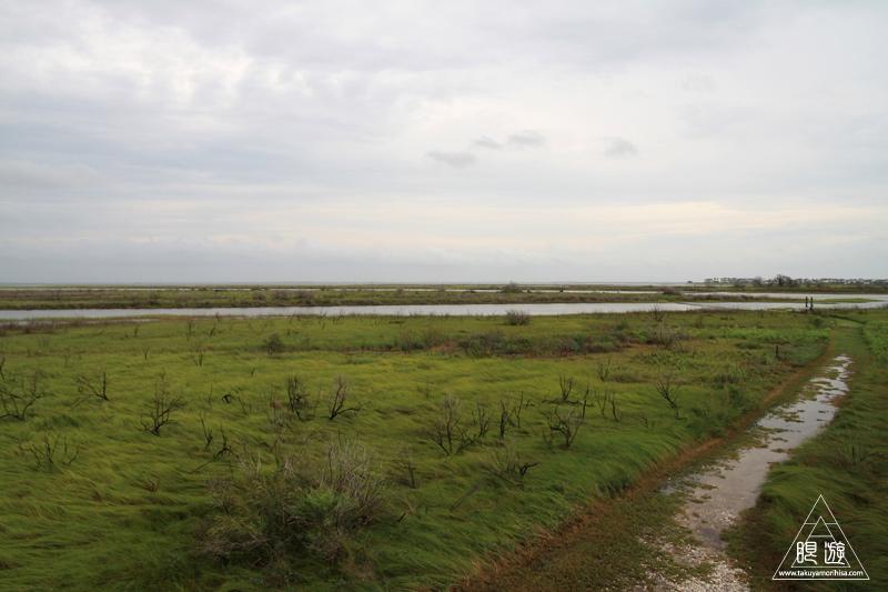 107 Galveston Island State Park ~湿地に潜入できず~_c0211532_1375564.jpg