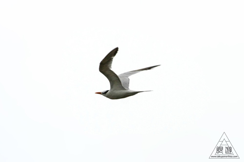 107 Galveston Island State Park ~湿地に潜入できず~_c0211532_15103240.jpg