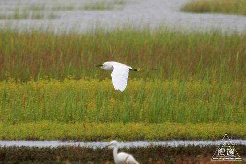 107 Galveston Island State Park ~湿地に潜入できず~_c0211532_15473921.jpg