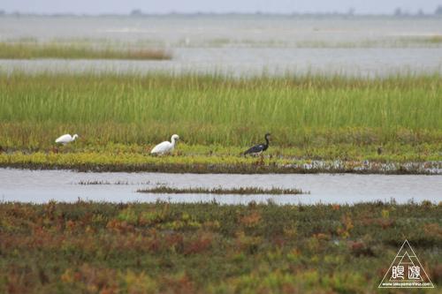 107 Galveston Island State Park ~湿地に潜入できず~_c0211532_1583321.jpg