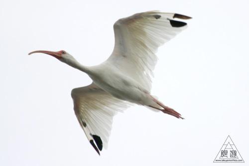 107 Galveston Island State Park ~湿地に潜入できず~_c0211532_1591525.jpg