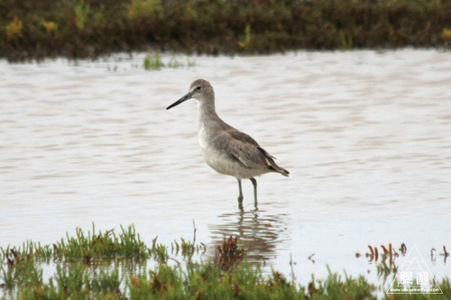 107 Galveston Island State Park ~湿地に潜入できず~_c0211532_1663635.jpg