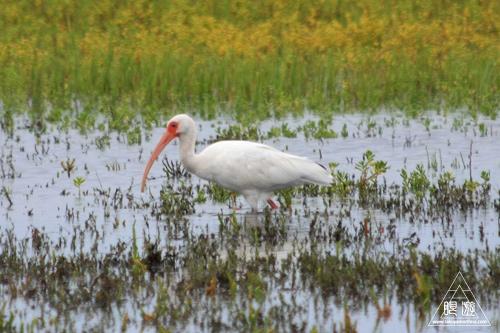 107 Galveston Island State Park ~湿地に潜入できず~_c0211532_1675521.jpg