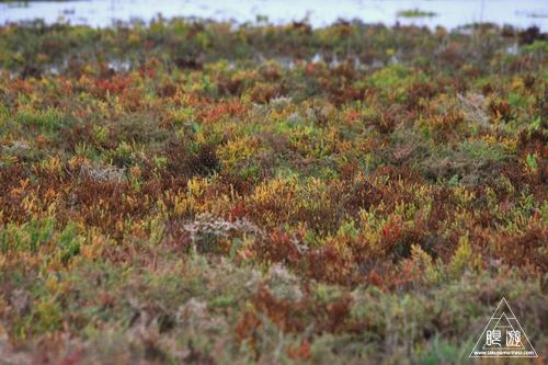 107 Galveston Island State Park ~湿地に潜入できず~_c0211532_169353.jpg