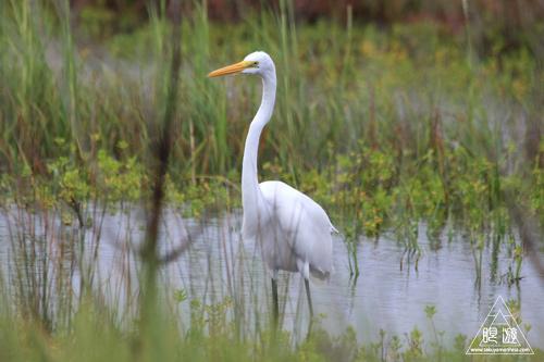 107 Galveston Island State Park ~湿地に潜入できず~_c0211532_943041.jpg