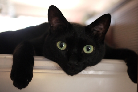 インベーダー猫 のぇる編。_a0143140_23463042.jpg