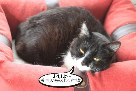 抜け毛すっきりとこの時期に猫団子_e0151545_20555513.jpg