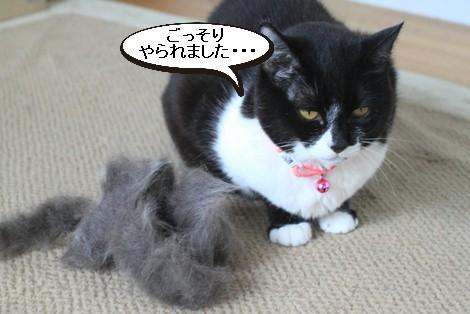 抜け毛すっきりとこの時期に猫団子_e0151545_20573827.jpg