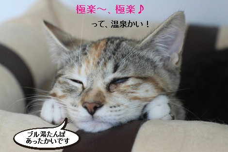 抜け毛すっきりとこの時期に猫団子_e0151545_21104737.jpg