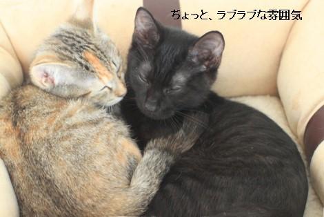 抜け毛すっきりとこの時期に猫団子_e0151545_2112956.jpg
