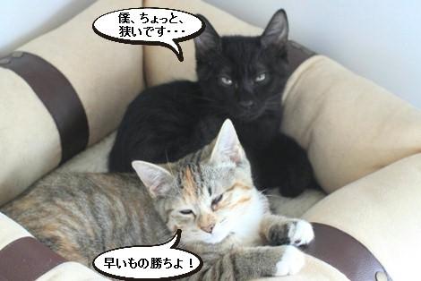 抜け毛すっきりとこの時期に猫団子_e0151545_218315.jpg