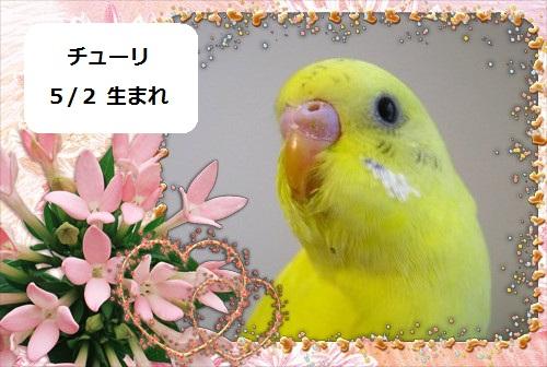 f0196665_0364375.jpg