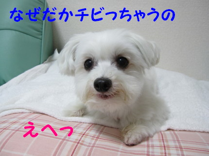 b0193480_1222247.jpg