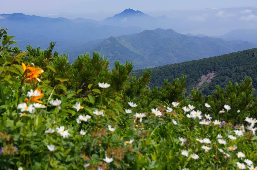 7月21日、徳舜瞥山、ホロホロ山と樽前山-その1-_f0138096_1852255.jpg