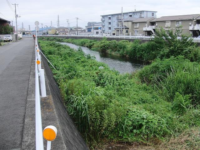 やっぱりヘビが出た!小潤井川の草刈り_f0141310_7254383.jpg