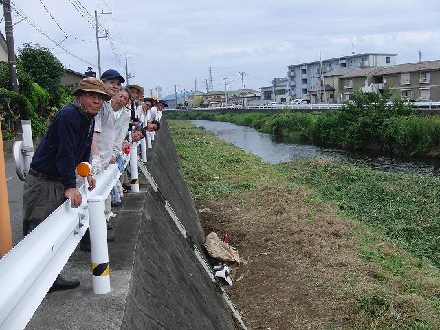 やっぱりヘビが出た!小潤井川の草刈り_f0141310_7255114.jpg