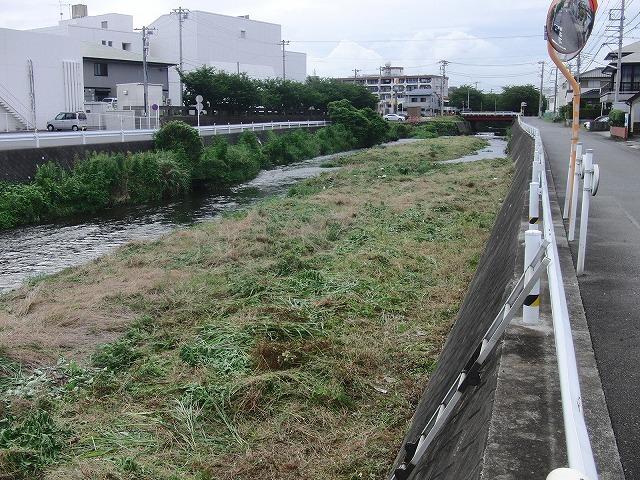 やっぱりヘビが出た!小潤井川の草刈り_f0141310_7261342.jpg