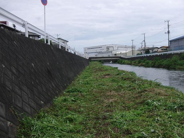 やっぱりヘビが出た!小潤井川の草刈り_f0141310_7263446.jpg