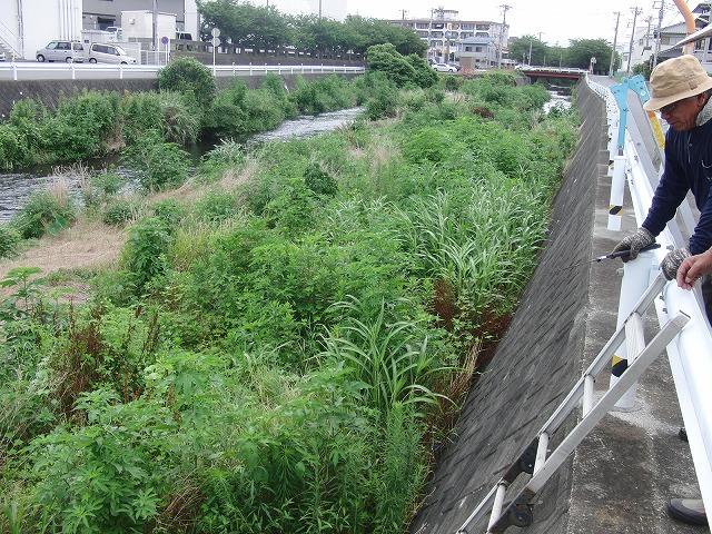 やっぱりヘビが出た!小潤井川の草刈り_f0141310_726572.jpg